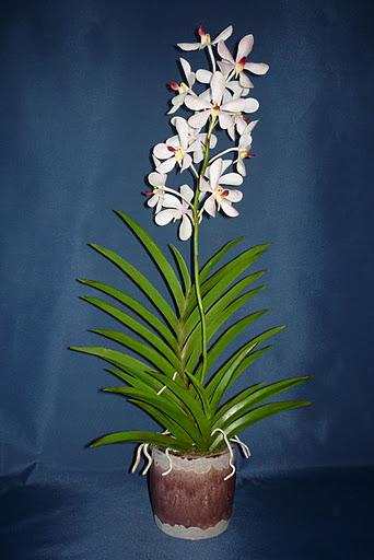 Mokara orchidea készítése