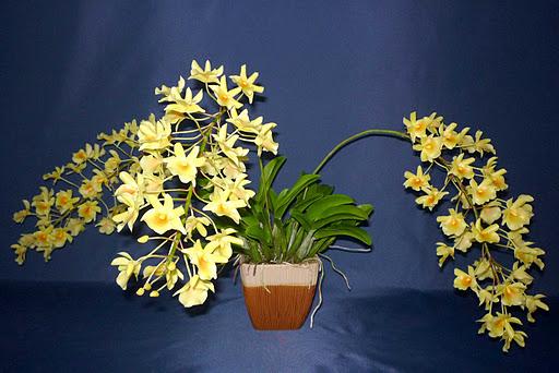 Dendrobium sok apró sárga virággal