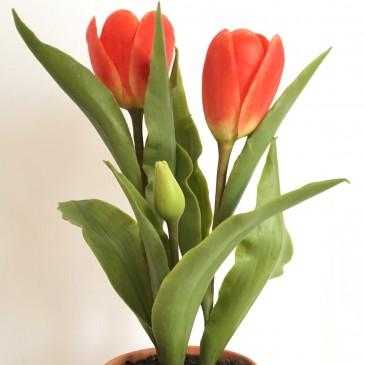 32. virág – Tulipán