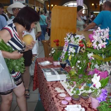 2012-ben is Japán Napok a Vásárcsarnokban!