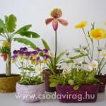 www.csodavirag,hu