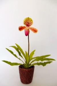 Papucsorchidea 30cm, 14000Ft