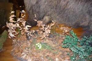 Szártalan kankalin és hóvirág