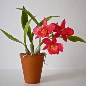 Végre orchidea a tanfolyamon
