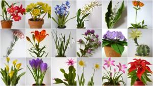 Tanfolyami virágok