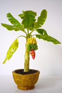 Mini banánfa