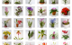 30 tanulható agyagvirág