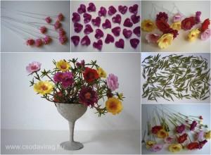 Porcsinrózsa – Portulaca grandiflora
